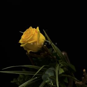 Rosa Individual Amarillo