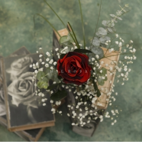 Rosa Individual Bicolor Misterio