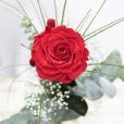 Rosa Individual Rojo Pasión XXL