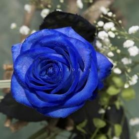 Rosa Individual Azul Extra