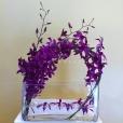 Orquideas Dendrobium Cristal
