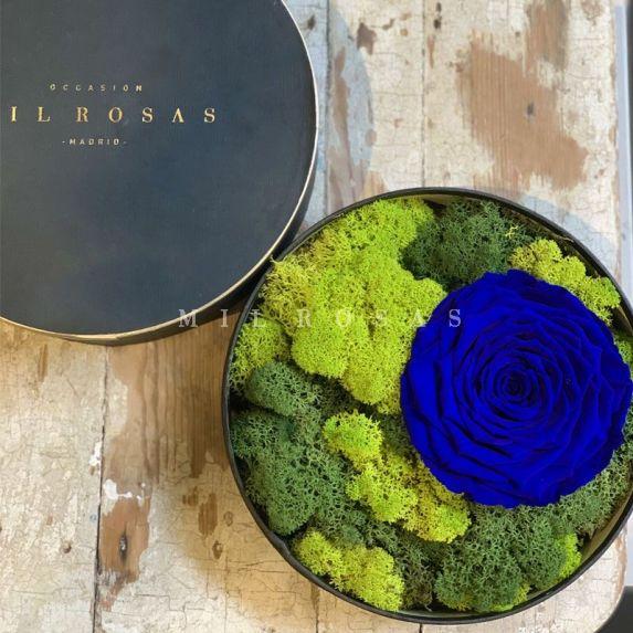Cofre Tresor de Rosas Preservadas Azules