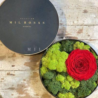 Caja Tresor de Rosas Preservadas